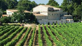 La Safer doit encadrer les transferts de parts sociales du vignoble