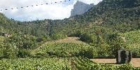Les viticulteurs du Diois sont soulagés suite aux prospections 2016 de la flavescence dorée: la maladie ne s'est pas propagée et semble en perte de vitesse