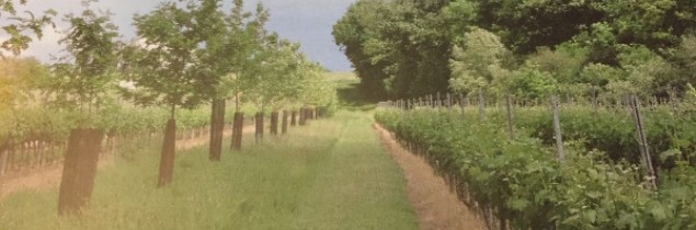 According to initial data from the Vitiforest programme, rows of trees have no impact on vigour or ripening issues.