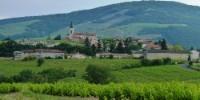 La SCIC Agamy vignobles a été créée en septembre 2017 pour faciliter la reprise de vignes dans les crus du Beaujolais