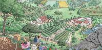 Les pratiques agroécologiques suivies par l'IFV vont de la préservation des sols à celle de la biodiversité, en passant par la réduction des intrants et l'adaptation au changement climatique.