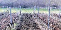 Le Vinichar est un mélange de compost de marc de raisin et de biochar.