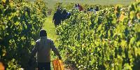 Un tiers des RSE serait employé en viticulture et horticulture (notamment kiwis).