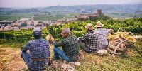 13600 hectares de paysages sont classés, composés à 60% de vignes.