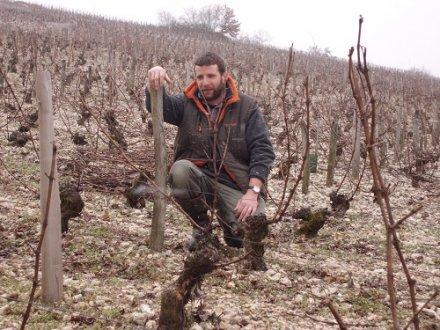 Sur mesure : des plants haut de gamme pour les vignobles du Centre