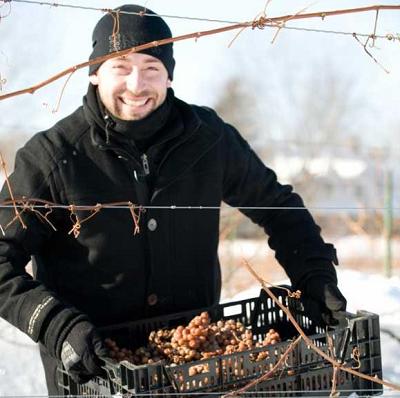 Québec : le vin de glace devient une Indication Géographique