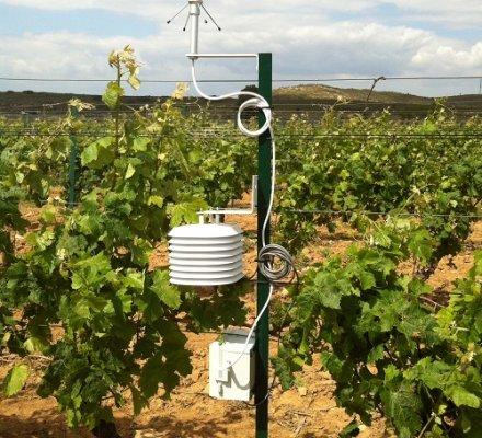 Météo et climat : Terra Clima propose un service de précision au vignoble