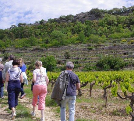 Les vignobles de Beaumont du Ventoux engagés en faveur de la « biosphère » du Mont Ventoux