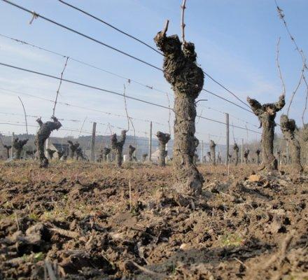 Agro-écologie : les viticulteurs sont les bons élèves de l'agriculture française