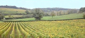 Grande Bourgogne : Béjot consolide son approvisionnement avec le domaine du Chapitre