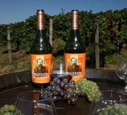 Jura : la vigne de Pasteur utilisée pour un nouveau programme de recherche sur les maladies du bois