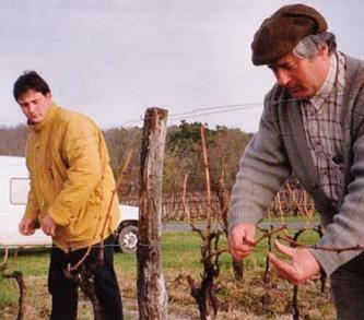 Préparer la transmission de son exploitation viticole : venez poser vos questions en Aquitaine