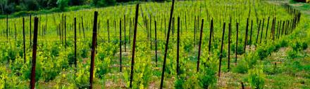 Languedoc : un projet inédit de vignes résidentielles