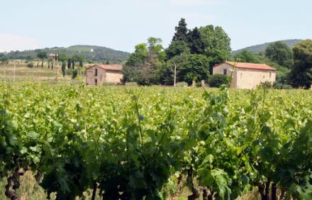 Languedoc : Boris Leclercq, nouveau propriétaire du domaine de Saint-Dominique