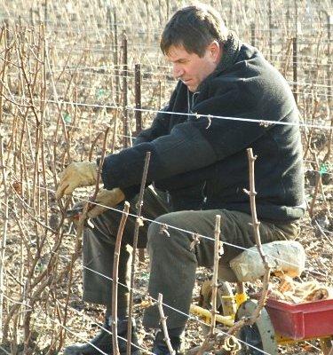 Photographie de la viticulture 2014  : stabilité du nombre de chefs d'exploitations viticoles