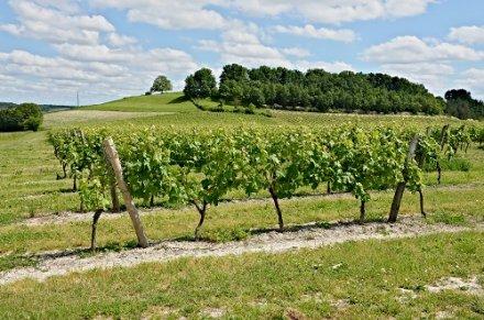 Charente : la filière des vins sans IG se dote d'un contrat de commercialisation