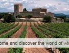 Torres, Casillero del Diablo et Château Latour, le top 3 du classement 2014 « Drinks International »
