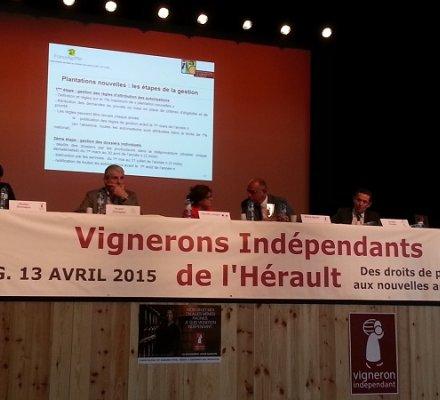 Hérault : les vignerons indépendants déconcertés par le nouveau régime de plantations