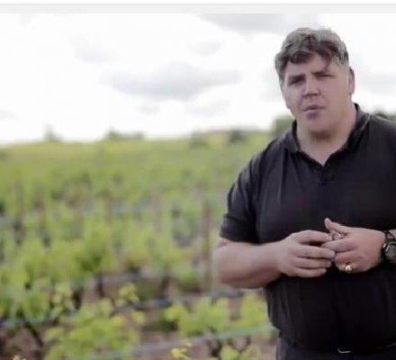 Beaujolais : un vigneron bourguignon poursuivi pour refus du traitement contre la flavescence dorée