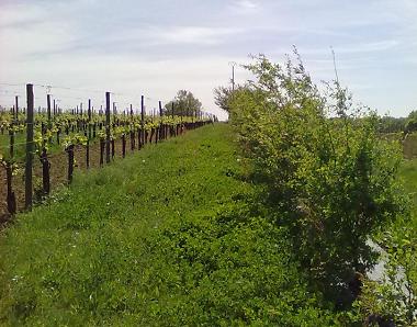 Côtes de Bourg : planter des haies pour allier protection des vignobles et des sites sensibles