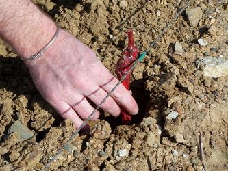 Gestion en ligne des autorisations de plantation : le site Vitiplantation est né