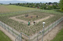 La Cour de cassation annule la relaxe des « Faucheurs volontaires » de l'essai OGM de Colmar