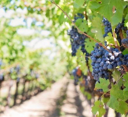 Giesco : présentation d'une démarche globale de viticulture durable