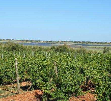Languedoc-Roussillon : le marché du foncier viticole croît de 29%