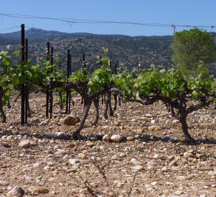 Bassin Rhône-Provence: création d'un syndicat pour gérer les plantations des vins sans IG