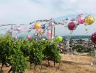 Tain l'Hermitage : installation gonflée pour vignoble classé