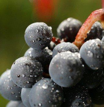 Beaujolais : crise à l'interprofession des vins