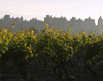 Languedoc-Roussillon : un millésime 2015 proche de l'idéal viticole