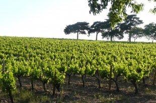 France : une récolte prévue à 46,5 millions d'hl