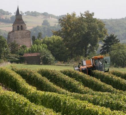 Sauvignon blanc : CVG lance ses vendanges 2015 et ses ventes à 100 €/hl