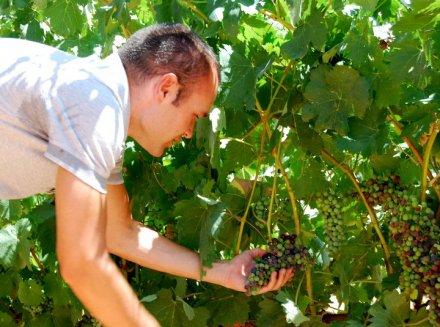 Andrès Inesta dans son vignoble.