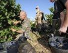 Des anciens légionnaires dans les vignes