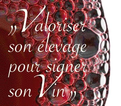 Bordeaux : les œnologues se réunissent sur la question de l'élevage