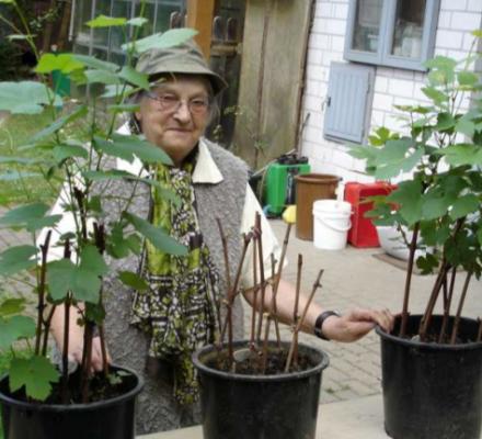 Biodynamie : décès de Maria Thun, créatrice du calendrier des semis