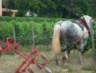 Vin bio : les vignerons et leurs fournisseurs seront-ils prêts pour la vendange 2012 ?