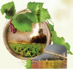 La viticulture biologique définie en 6 principes par l'OIV