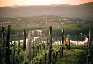 Hongrie : suite à la petite vendange, un marché à la recherche de vins