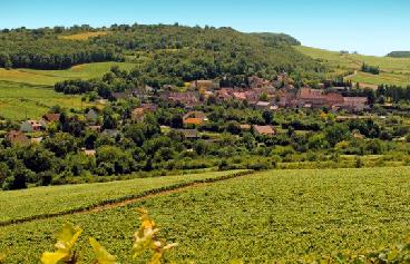 Bourgogne : le domaine Chanzy racheté par un fond d'investissement
