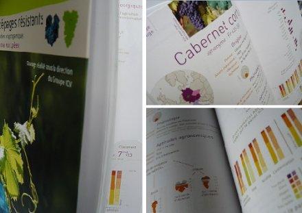 Cépages résistants à l'oïdium et au mildiou : parution du guide technique de l'ICV