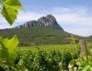 Pic Saint-Loup : à la Croisée des Vins, des terroirs européens et de l'oenotourisme