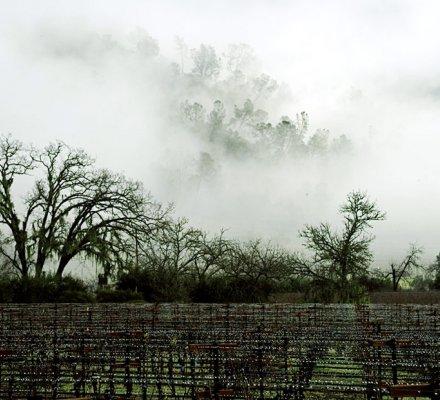 Après Bordeaux et la Bourgogne, François Pinault investit dans un domaine californien