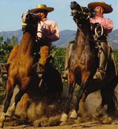 Espagne : les importations de vins doublent en volume, portées par le vrac chilien
