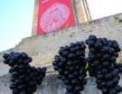 Saint-Emilion : le ban des vendanges 2013, c'est aujourd'hui !