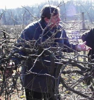 Viticulture: retirement of Alain Carbonneau, the famous Montpellier teacher