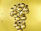 Travaux appliqués : vente aux enchères de champagnes pour la licence commerciale d'Avize