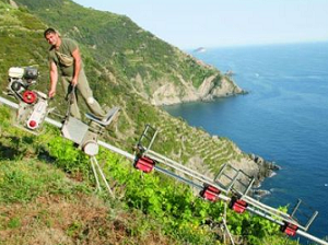 Viticulture héroïque : le parc naturel des Cinque Terre, patrimoine de l'UNESCO, soutient ses vignerons